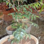 Nakshatra Plants